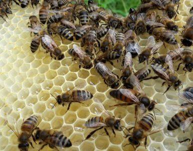 bezige-bijen